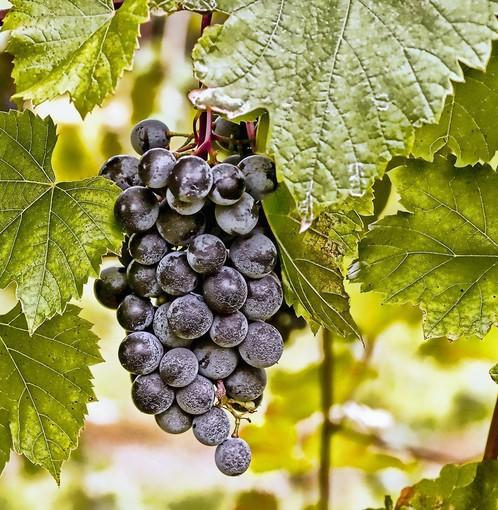 Franklin HIll Vineyards in Bangor is among the Lehigh Valley Wine Trail wineries participating in Wine in Bloom.