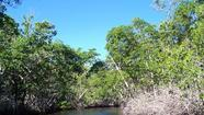 WASHINGTON – The next big phase of Everglades restoration will plug canals, build levees and create giant storage areas to guide fresh clean water through western Broward and Palm Beach counties and into the core of the famed River of Grass.