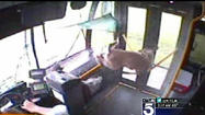 Deer crashes through windshield