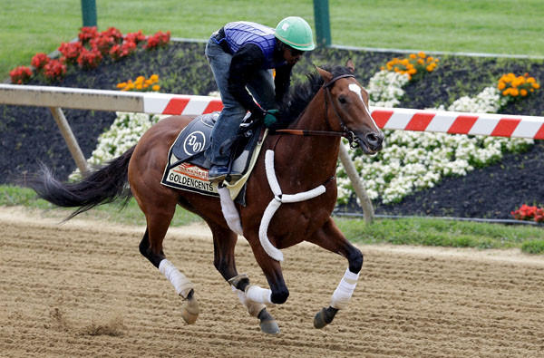 Jockey Kevin Krigger works out Goldencents on Wednesday in preparation for the 138th Preakness Stakes at Pimlico Race Course.