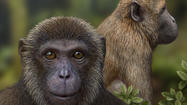 Scientists have added two species of ape and monkey to the evolutionary tree, filling in a 10-million-year gap in the fossil record from a period when apes and Old World monkeys diverged.