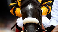 Poll: Who will win the 2013 Preakness?