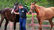 Davie equine rescue group hosting adopt-a-thon