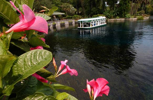 The iconic glass-bottom boats still take visitors over the mammoth spring in the Silver River at Silver Springs in Ocala.
