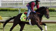 Seeking redemption from a Kentucky Derby effort that didn't go as planned, Itsmyluckyday will try to rebound Saturday as one of nine horses in the 138th running of the $1 million Grade I Preakness Stakes at Pimlico Race Course in Baltimore.