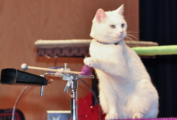 Tuna, also the Rock Cats band manager, plays cowbell.