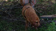 MAY 17, 2013) – Last week Red, New Lenox Fire Protection District's search and rescue blood hound, went to a special training to learn valuable search and rescue skills.