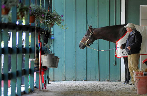 Kentucky Derby winner Orb and a trainer catch some down time on May 17 at Pimlico Race Course stables. Orb will go for the second leg of the elusive Triple Crown this Saturday.