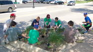 West Chicago, Illinois: May 17, 2013 – As volunteers go, the Boy Scouts and Girl Scouts lead the pack. For the past two years, West Chicago Boy Scout Troop #33 sponsored by Glen Arbor Community Church, has taken on the service project of beautifying downtown West Chicago by planting a variety of flowers and ornamental grasses supplied by the City in downtown beds. Additionally, West Chicago Girl Scout Troop # 50386 is pitching in with their individual creativity in creating colorful art posters to help promote an upcoming event.