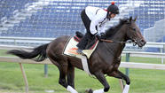 Stakes are highest for Orb in Preakness