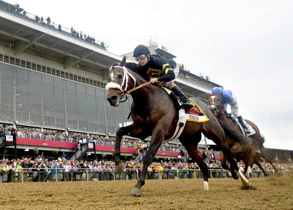 Oxbow, ridden by Gary Stevens, wins the 138th running of The Preakness Stakes.