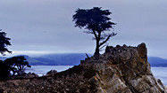<b>Photos:</b> Standing before the Lone Cypress