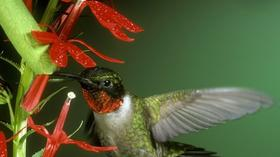 Garden for wildlife: Certain plants, along with a sugar-filled feeder, bring hummingbirds to your yard