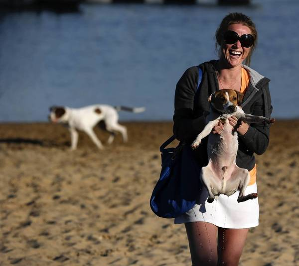 Jorie Heinz carries Gizmo from the water as she leaves Belmont Harbor Dog Beach in Chicago. More owners are turning to trainers to teach their pets to behave at dog parks and get along with other animals.