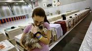 To keep your pet safe in the event of a hurricane, your choices are to keep the pet with you at home, take it with you if you evacuate, leave it with a friend or board it at a kennel.