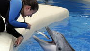 "One secret to a dolphin ultrasound is that the machine is pretty much the same one used on human women, except the ""Logiq e Vet"" branding badge is replaced with something more species-appropriate."