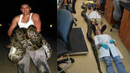 A record-setting Burmese python was killed with a knife in a rural section of southern Miami-Dade County, after a long struggle in which it wrapped itself around a man's legs.