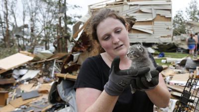 Oklahoma tornadoes take toll on animals