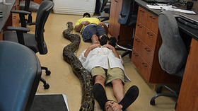 Python, more than 18 feet long, sets new record in Florida