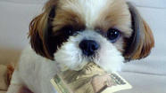 Pet Sitting prices in Chicago's NW suburbs vary depending on the service provider. Services determine their prices based on many different factors and not all of them are the same. The pricing and company can make a difference in you and your pets' pet sitting service.