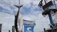 Ocean City Tuna Tournament (July 12-14)