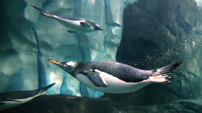 SeaWorld Orlando: 5 tips for traveling to new Antarctica