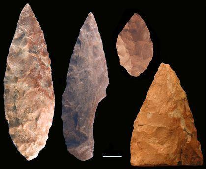 These bifacial points recovered from Blombos Cave, South Africa, were manufactured during the Middle Stone Age about 75,000 years ago by anatomically modern humans. Scientists suggest that anatomically modern humans fashioned tools such as these about that time, when the area was warmer and wetter.