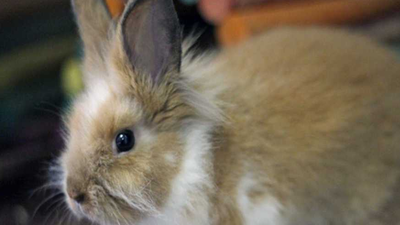 Pet of the Week: Bunny 'Emma'
