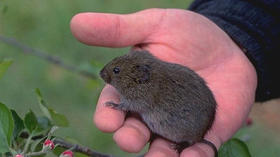 Voles: Mousetraps help Yorktown, Va., eliminate these plant eaters from his garden