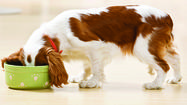 Q: I've heard a lot about raw dog food, but it seems pricey. Is it safe? Are the health benefits substantial?