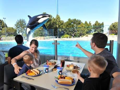 Dine with Shamu  Where: Shamu Stadium at SeaWorld Orlando   The lowdown: The $39.99 buffet includes roasted pork loin, rosemary-glazed grilled chicken, Black Angus strip loin and fillet of cod. For dining reservations, call 1-888-800-5447 (theme park admission is required).