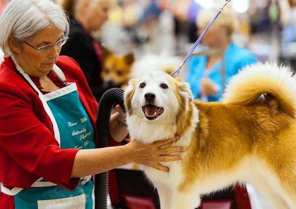 The Hampton Roads Convention Center will welcome over 1,500 canine friends to The Virginia Memorial Day Cluster All-Breed Dog Show. The event, taking place May 24-26, 2013, and hosted by the Langley Kennel Club, is expected to draw over 4,000 spectators within a three day period.