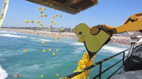 A ducky day at the HB Pier