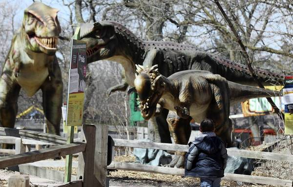 Isaac Boone, 5, of Highland, Indiana walks through the Dinosaurs Alive! exhibit at the Brookfield Zoo.