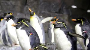 Little Puck steals show in SeaWorld's new wild ride to Antarctica