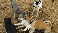 Pictures: A Day At The Enfield Dog Park