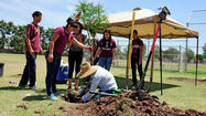 CALEXICO — Students got a little dirty Wednesday as they made their school a more beautiful, healthier and environmentally friendly place by planting trees at De Anza Ninth Grade Academy.