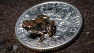 Glow-in-the-dark cockroach among top 10 new species of 2012