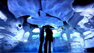 After more than a year of construction and two years of hype, SeaWorld Orlando's Antarctica: Empire of the Penguin formally opens Friday to what the marine park expects will be a sea of excited guests.