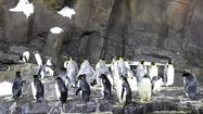 SeaWorld's Antarctica: Does it pass the sniff test?