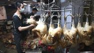 H7N9 bird flu can pass between mammals, researchers find