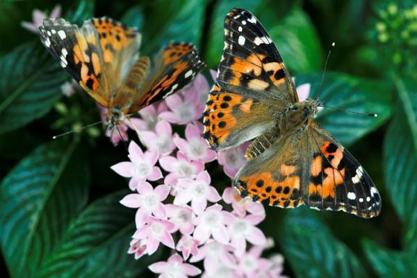 Want to see some butterflies? A new attraction in Scottsdale, Ariz., will display 150 species.