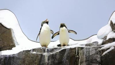 SeaWorld Orlando's Antarctica: Empire of the Penguin opens