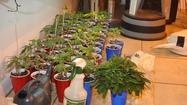 Grow house containing 200 marijuana plants discovered in Eustis home