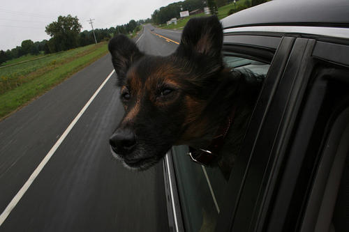 Gracie taking in the scenery in western Wisconsin, heading back to Chicago.