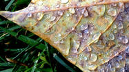 Reader photo: Dew drops on a leaf
