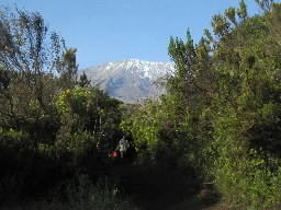 Mt. Kilimanjaro peaks out from the bottom of a trail.