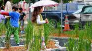 "Reminiscent of the beloved novel ""A Tree Grows in Brooklyn,"" a labyrinth of wild grasses has taken root next to the Grace Montessori School in the shadow of a seven-deck concrete parking garage in one of the busiest sections of downtown Allentown."