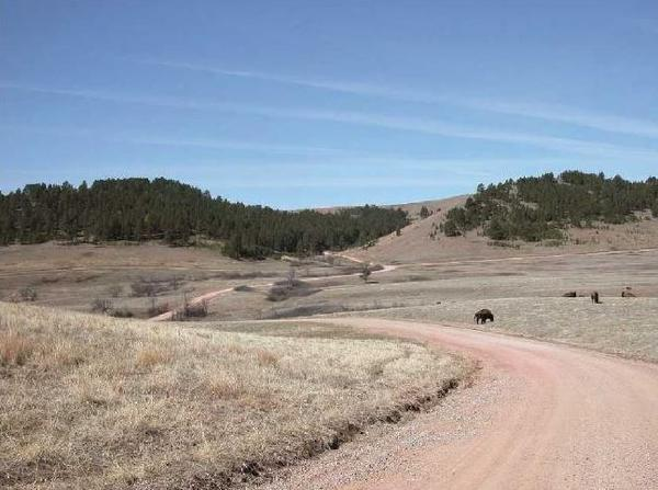 This is Custer State Park Route 3, a gravel road that shortcuts across the southern segment of the wildlife loop.