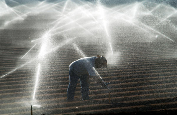 Farm worker in Imperial Valley adjusts sprinklers spraying Colorado River water.